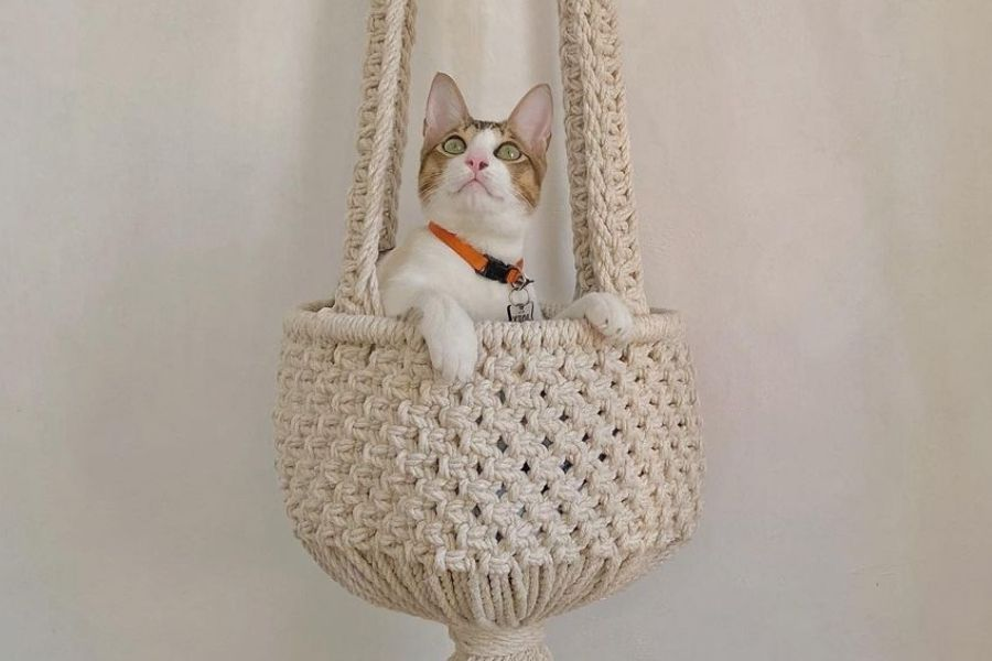 12 Easy DIY Macrame Pet Projects for Your Cats & Dogs